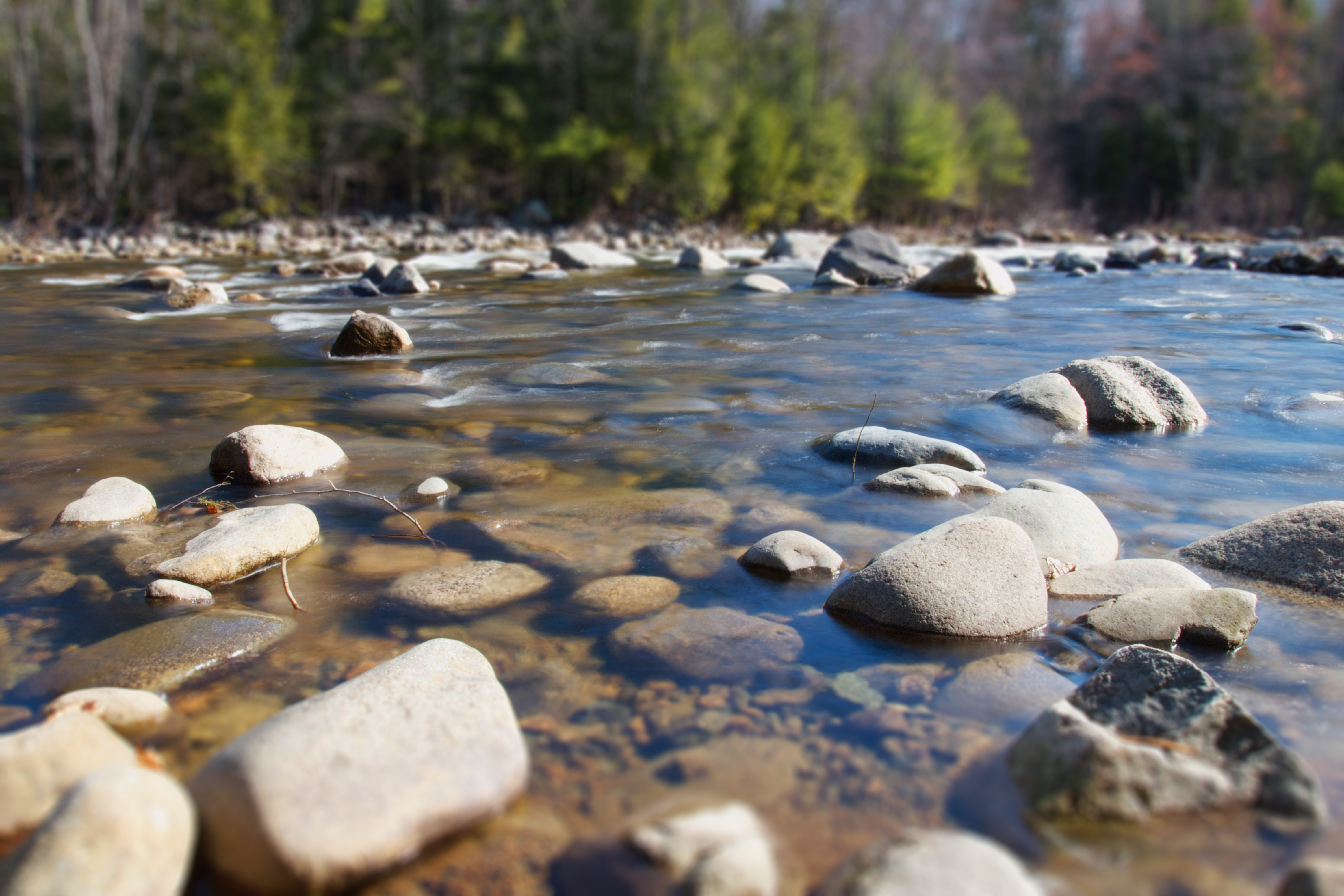 Supporting the restoration of Beer Creek.